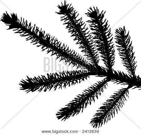 Pine Needle 456.Eps