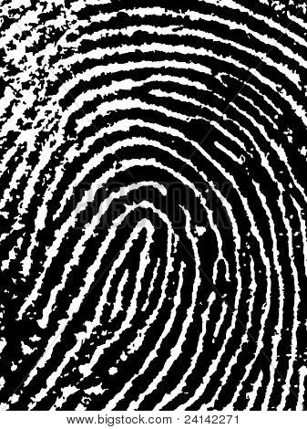 Close crop of a Fingerprint - Very accurately scanned and traced ( Vector is transparent so it can be overlaid on other images, vectors etc.)