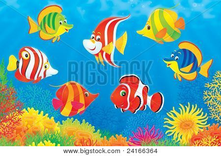 Tropical fish above a coral reef