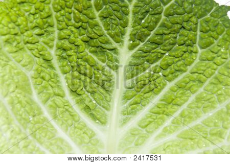 Savoy Cabbage Background