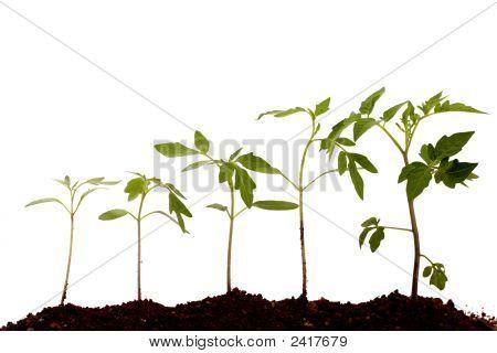 Plants-New Life
