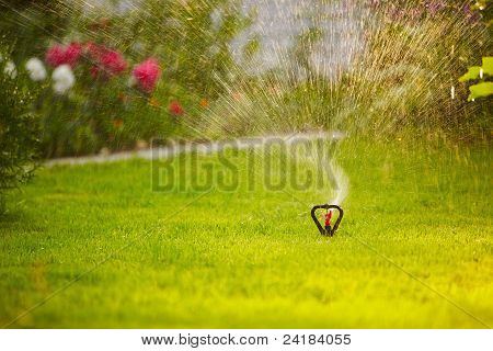 Watering The Lown