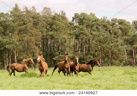 The flock Of  Horses