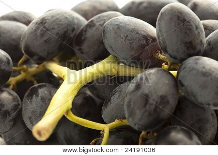 extreme closeup of a fresh black grapes
