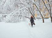 Moscow Winter Snowy Day View On Woman Trying To Pass Snow Pile To Bypass Fallen Trees Under Snow. He poster