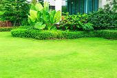 Green Lawn, The Front Lawn For Background, Garden Landscape Design With Modern House poster