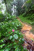 stock photo of negro  - Path through the foggy Toro Negro Rainforest of Puerto Rico.
