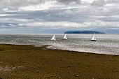 picture of anglesey  - Sailboats on Anglesey Island - JPG