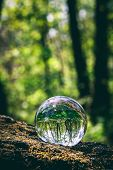 Glass sphere with forest reflection in it, standing on a tree. Natural environment. Save the Earth. poster