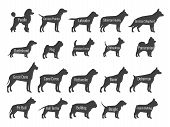 Black Dog Breeds Vector Silhouettes Isolated On White Background. Profile Of Poodle And Labrador, Si poster