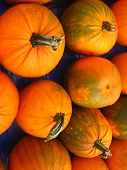 pic of tarp  - a group of small pumpkins on blue tarp - JPG