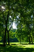 Summer Landscape - City Summer Park With Deciduous Green Park Trees In Sunny Summer Day poster