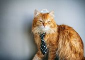 Serious Red Cat In Tie, Painted Hat, Sits On Gray Background poster