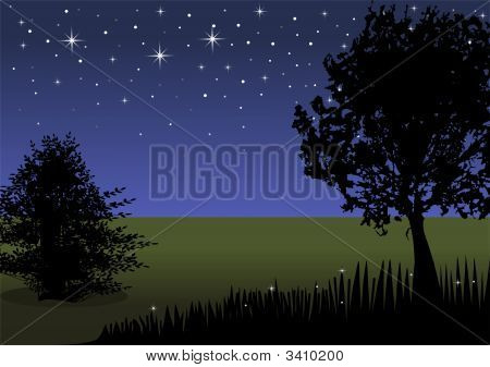 Night Landscape With Tree