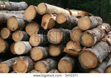 Logging - Close View