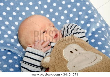 Newborn Baby On Blanket