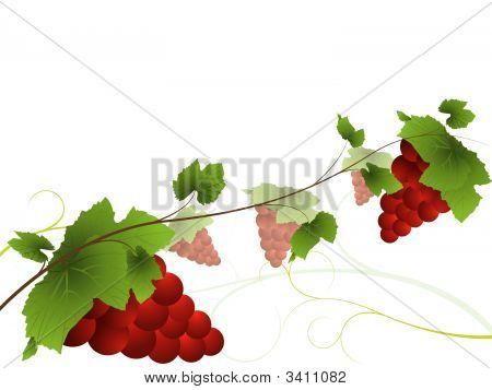 Grapevine With Red Bunches