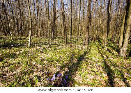 madera de primavera