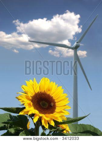 Sonnenblume mit Bee vor einer Windmühle