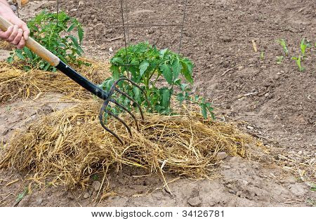 Garden Fork And Straw