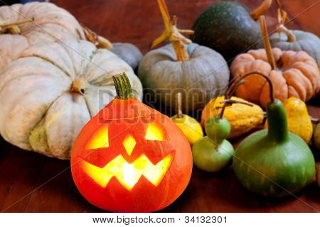 Halloween pumpkin Jack o lantern candle glowing with varied species [ photo-illustration]