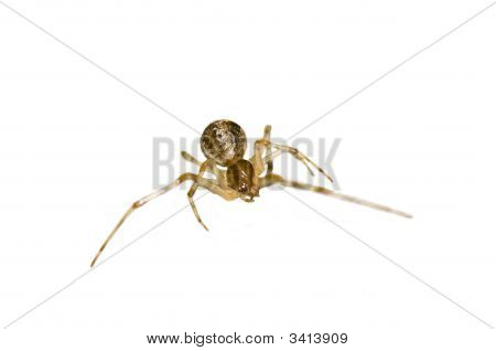 Isolated Stretching Macro Spider