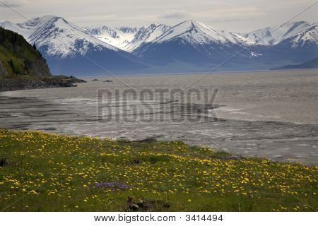 Snow Mountains Yellow Flowers Ocean Seward Highway Anchorage Ala