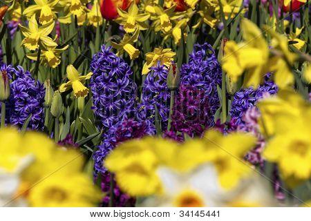 Spring flowers(closeup)