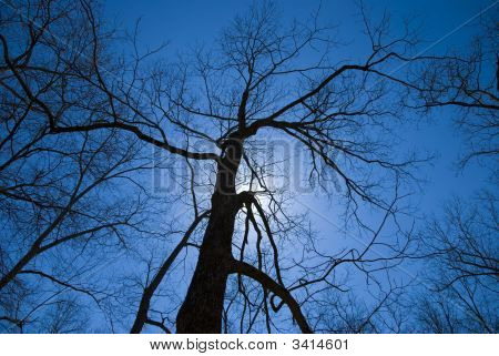 Scary Tree Silhouette
