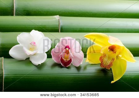 Three kinds of orchid on bamboo