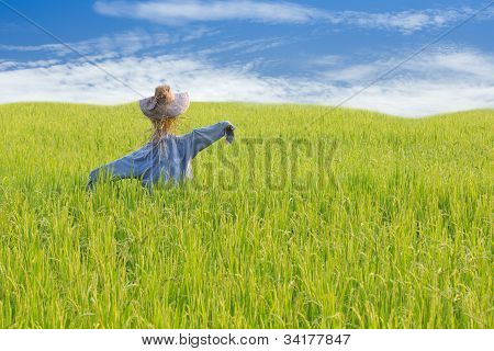 scarecrow on rice field