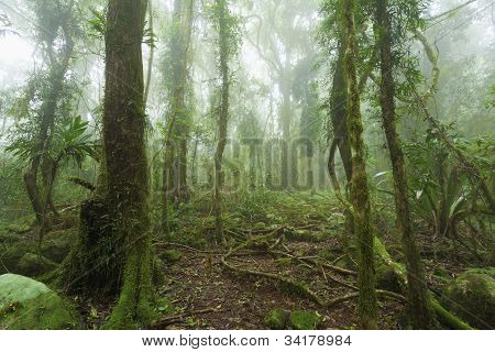 Mossy Australian Rainforest