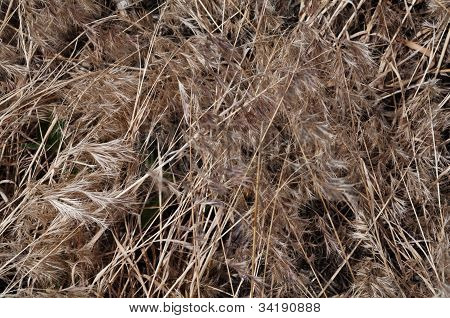 Tan Textured Dried Grasses.