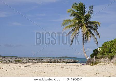 Gorgeous Tropical White Sand Beach