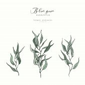 Eucalyptus Blue Gum Branch. Hand Drawn Wedding Herb, Plant Elegant Leaves For Invitation Save The Da poster