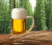 stock photo of bine  - glass of beer with barley and hop field - JPG