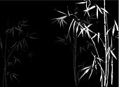 White Bamboo branches on black background