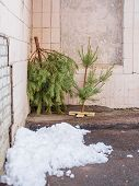 Discarded Christmas Tree Near Trash Cans. The End Of The Holiday Period Is Marked. The Problem Of Pr poster