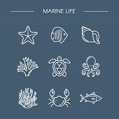 Marine Life Icons Set For Design. Icon Fish, Starfish, Coral, Octopus, Crab. Oceanology. Linear Styl poster