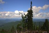 View From The Hill To The Mountain Peaks Through The Trunks And Branches Of Tall Pines. poster