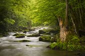 stock photo of backwoods  - Peaceful Great Smoky Mountains National Park foggy Tremont River relaxing nature landscape scenics near Gatlinburg TN - JPG