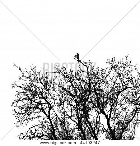 Magpie Bird On Tree Branches