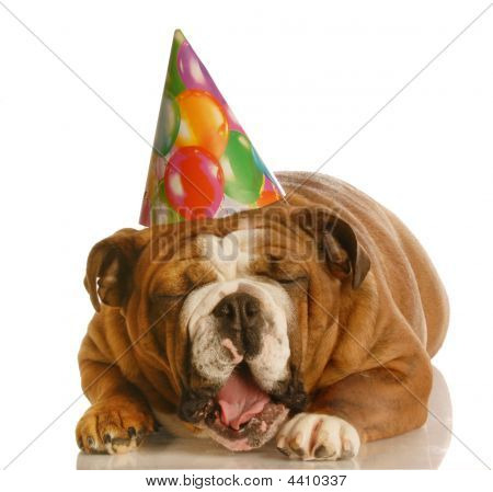 Laughing Birthday Bulldog