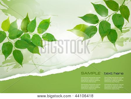 Nature background with green spring leaves and ripped paper. Vector illustration