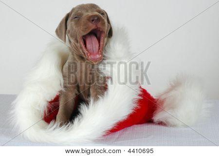 Yawning Santa Hat