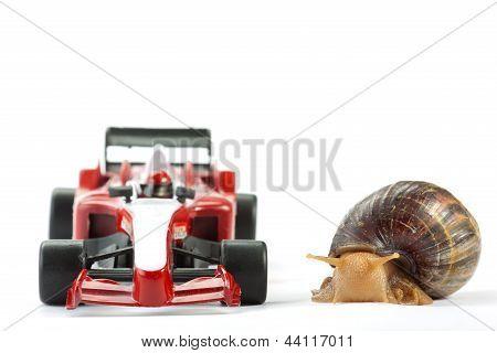 Formula 1 Snail Race