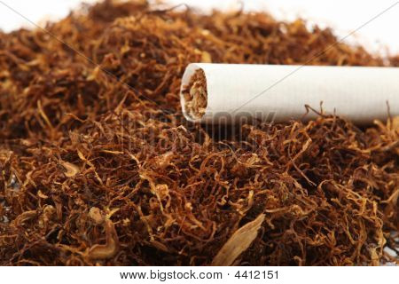 Cigarette On Tabacco