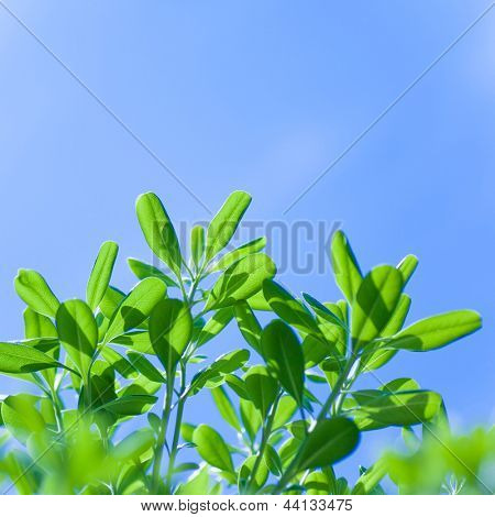 Árbol fresca hojas sobre fondo de cielo azul, naturaleza de la primavera, frontera floral, luz del sol, espacio de copia