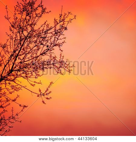 Beautiful blooming tree on red dramatic sunset background, spring time season, rural garden, seasonal nature