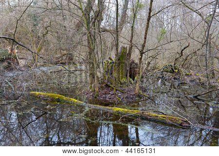 Scene with old woods on bog